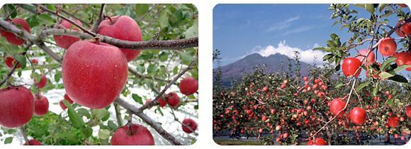 りんご玄米黒酢のイメージ3