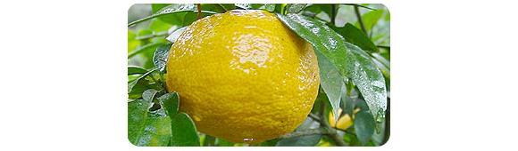 黒酢柚子ぽんずのイメージ3
